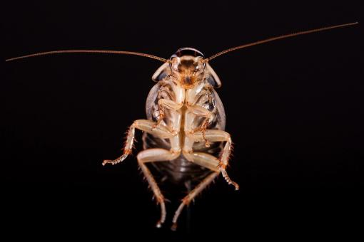 Free Stock Photo of Cockroach