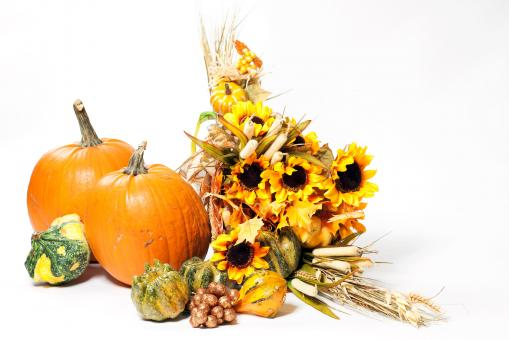 Free Stock Photo of Fall Cornucopia on a White Background