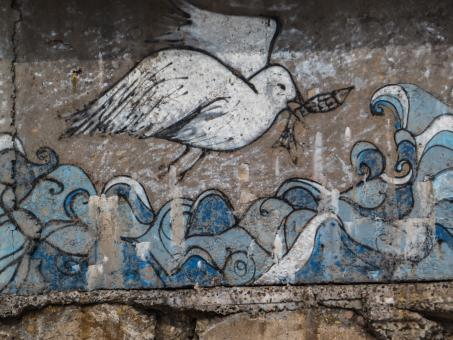 Free Stock Photo of Seagull caught on wall