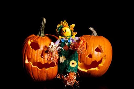 Free Stock Photo of Scarecrow standing with Pumpkins