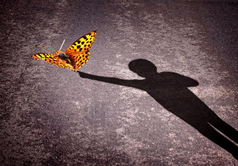 Free Stock Photo of Shadow of a little boy touching a butterfly