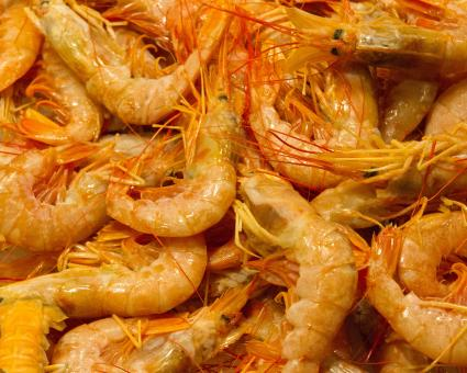 Free Stock Photo of Shrimp at fishmarket