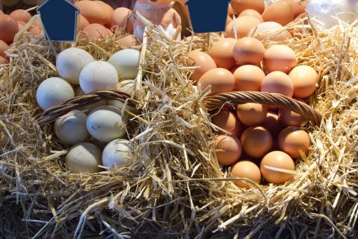 Free Stock Photo of Eggs at the Market
