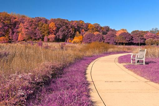Free Stock Photo of Winding Lavender Fantasy Path - HDR