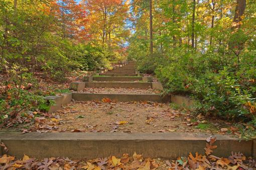 Free Stock Photo of Autumn Arboretum Stairway - HDR