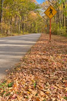 Free Stock Photo of Winding Autumn Road - HDR