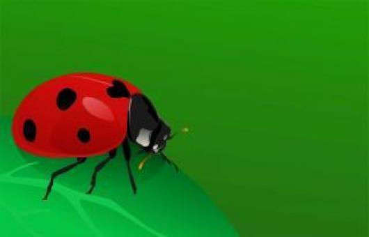 Free Stock Photo of Lady bug
