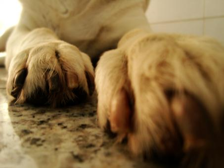 Free Stock Photo of Paws