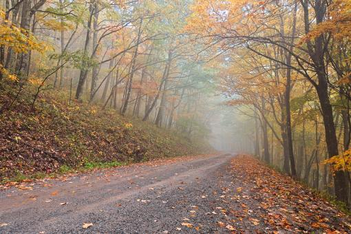 Free Stock Photo of Misty Autumn Forest Road - HDR