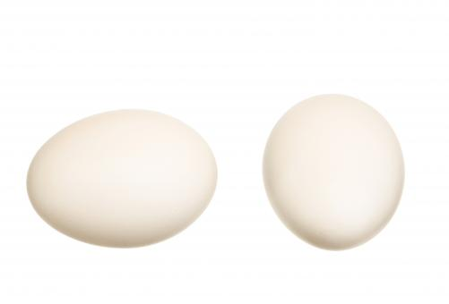 Free Stock Photo of White eggs