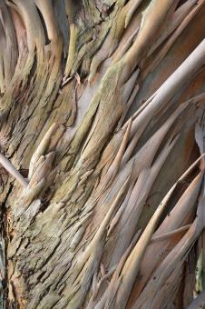 Free Stock Photo of Spinning Gum bark