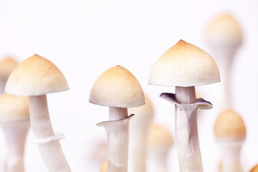 Free Stock Photo of mushrooms