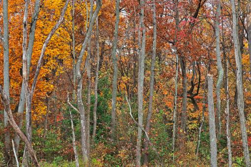 Free Stock Photo of Black Marsh Fall Foliage - HDR