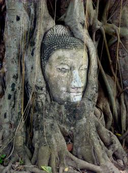 Free Stock Photo of Buddha Roots