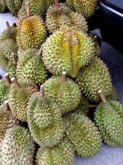 Free Stock Photo of Durian Fruit Sale