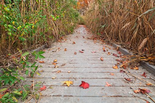 Free Stock Photo of Autumn Marsh Boardwalk - HDR