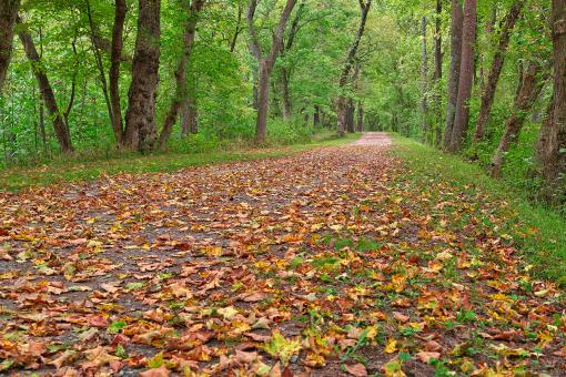 Free Stock Photo of Paw Paw Trail - HDR