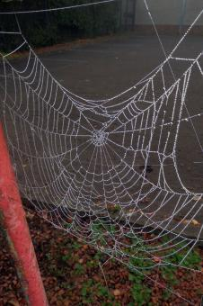 Free Stock Photo of Dew drops on spider's web