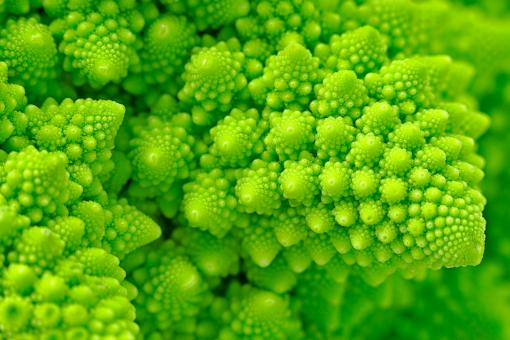 Free Stock Photo of Broccosaurus - HDR Macro