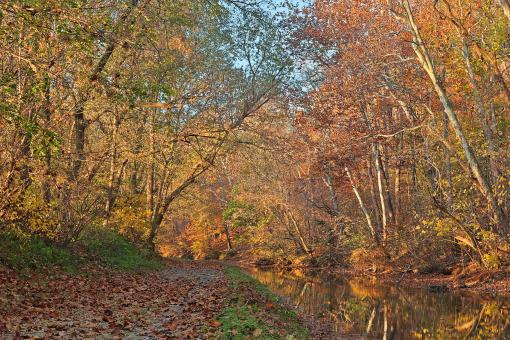 Free Stock Photo of Autumn Pennyfield Canal - HDR