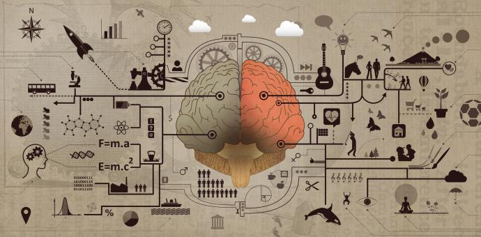 Free Stock Photo of Learning and Education - Brain Functions Development Concept