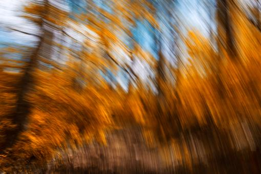 Free Stock Photo of Gold Forest Streaks