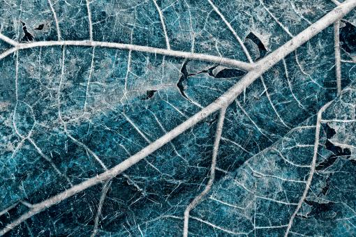 Free Stock Photo of Frozen Winter Leaf