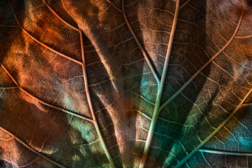 Free Stock Photo of Leaking Luster Leaf