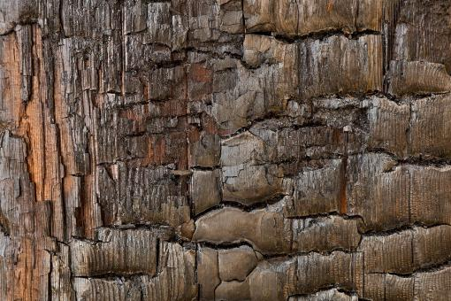 Free Stock Photo of Charred Wood - HDR Texture
