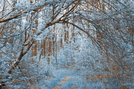 Free Stock Photo of Forest Arch Trail - Winter Blue
