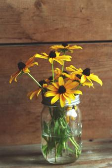 Free Stock Photo of Sunflower jar