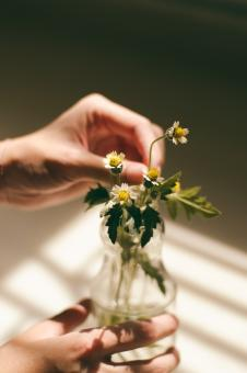 Free Stock Photo of Holding a flower