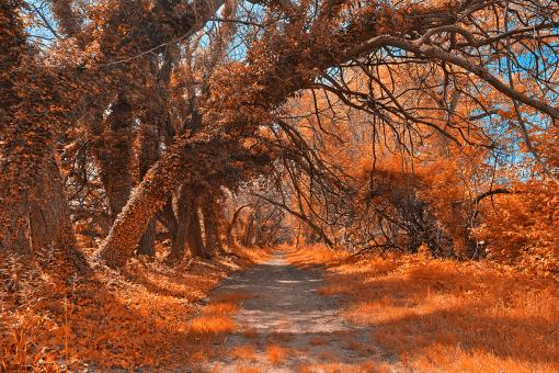 Free Stock Photo of Wye Island Amber Trail - HDR