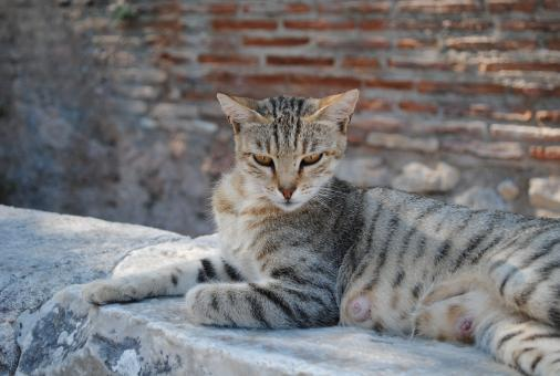 Free Stock Photo of Royal egyptian cat laying on ruins