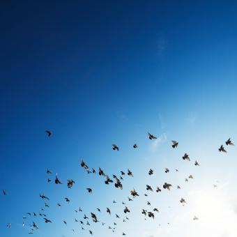 Free Stock Photo of Birds flying