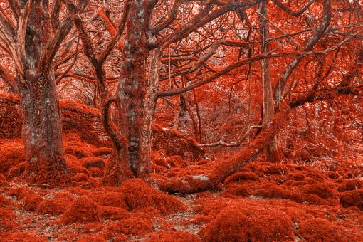 Free Stock Photo of Ruby Moss Forest - HDR