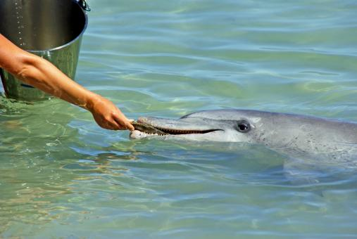 Free Stock Photo of Feeding the Dolphin