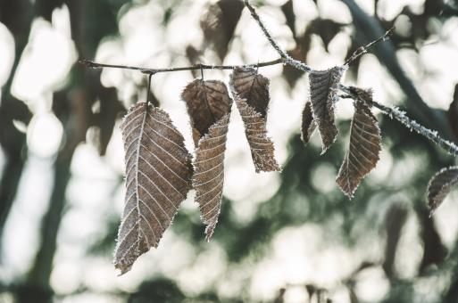 Free Stock Photo of Dry Leaves