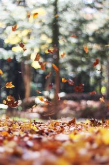 Free Stock Photo of Autumn