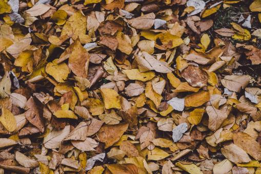 Free Stock Photo of Dead Leaves
