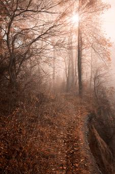 Free Stock Photo of Misty Sun Kissed Trail - HDR