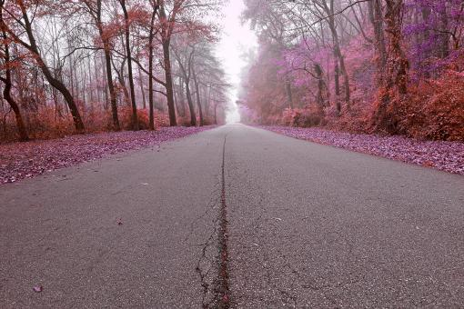 Free Stock Photo of Misty Wonderland Road - HDR
