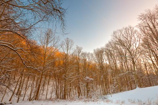 Free Stock Photo of Golden Winter Forest - HDR