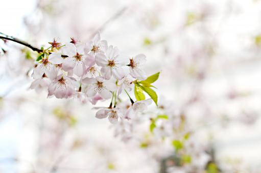 Free Stock Photo of Flower Tree