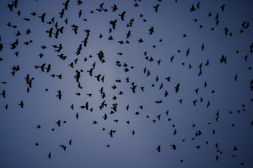 Free Stock Photo of Flying Birds