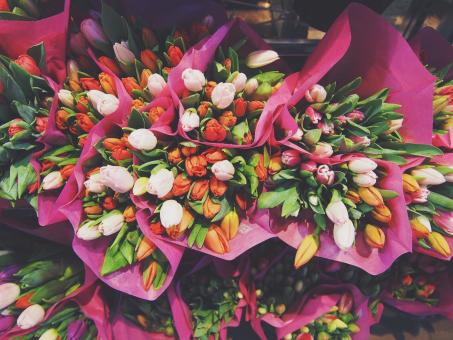 Free Stock Photo of Bouquet of Flowers