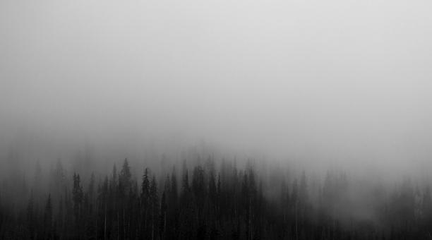 Free Stock Photo of Forest In The Fog
