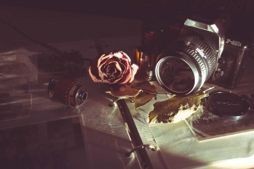 Free Stock Photo of Camera, film and rose