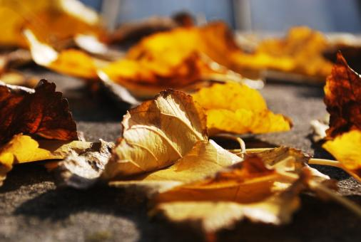 Free Stock Photo of Fallen Leaves
