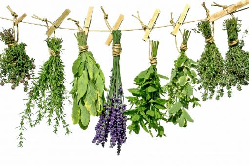 Free Stock Photo of Herbs